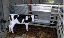linea-accessori-22-ratrello-fieno-e-mangiatoia-x-vitelli
